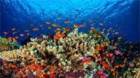 المرجان العقباوي ثروة وطنية في خطر