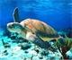 النفايات تهاجم الثروة البحرية في العقبة