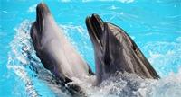 تعرف على 3 حيوانات ساحرة الجمال ستنقرض... 350 عالما يوجهون رسالة تحذير