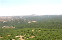 الغابات تتقلّص في الأردن نتيجة الاعتداء على المساحات الحرجية